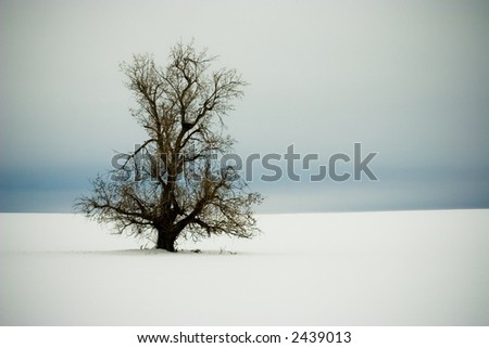 Lonely Winter Tree Vignette