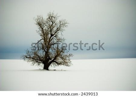 Lonely Winter Tree Vignette - stock photo