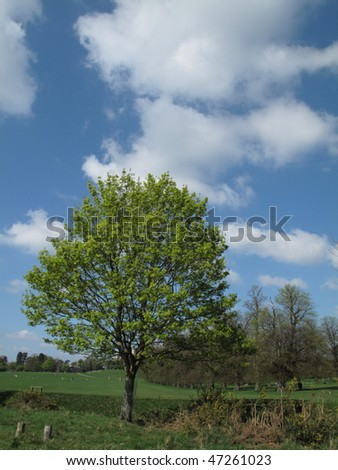 Lonesome Tree - stock photo