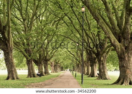 Long alley on a summer day with a dense pattern of branches - stock photo