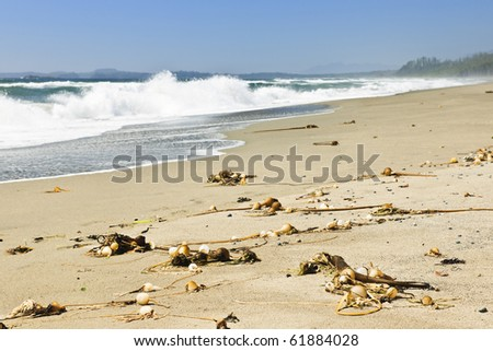 Long Beach in Pacific Rim National park, Canada - stock photo
