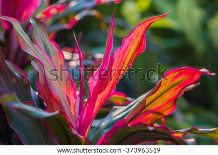 tropical plants stock images, royaltyfree images  vectors, Beautiful flower