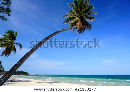 Long coconut tree on beach and blue sky