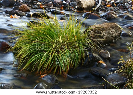 Long Exposure of a grassy plant on a Stream