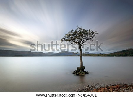 Long exposure of a lone tree in water