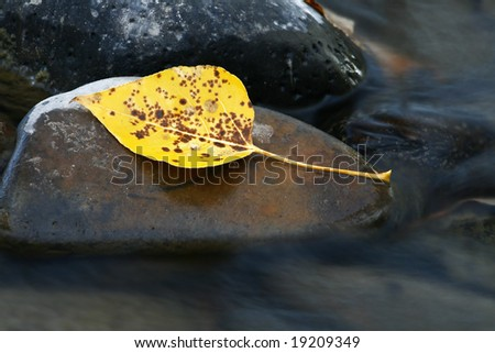 Long Exposure of an Autumn Leaf on a Stream