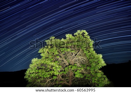 Long exposure of star trails passing by an illuminated tree. - stock photo