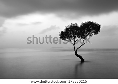 Long exposure seascape of mangrove tree.  - stock photo