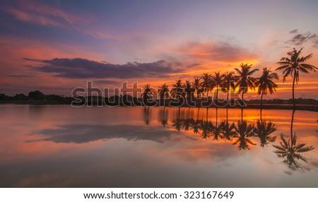 Long Exposure Shot Palm Tree Scenery with Full Reflection at Sunrise - stock photo