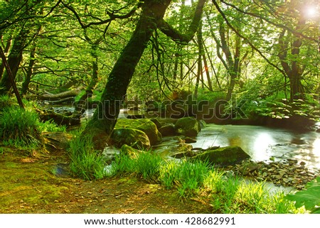 Long exposure view of The River Fowey flowing though Draynes Wood in Spring, with deliberate lens flare, at Golitha Falls National Nature Reserve, Cornwall, England, UK