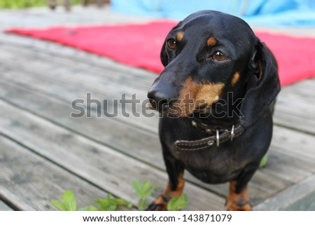 long for the owner - stock photo