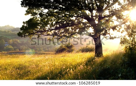 Long grass and tree in morning light - stock photo