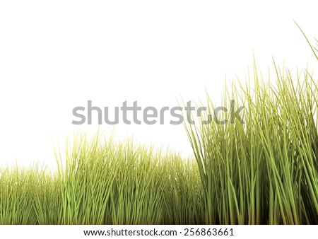 Long grass isolated on the white background. 3D render. - stock photo