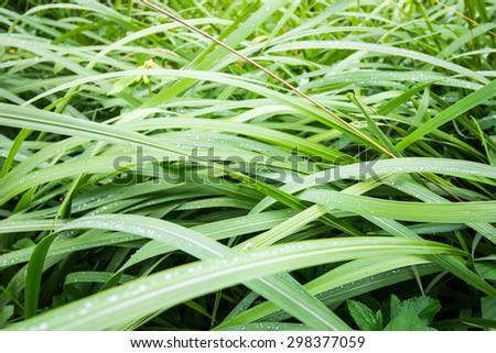 Long green grass for backgrounds and textures - stock photo