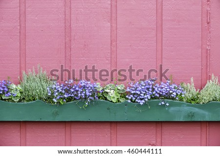 Long green wooden flowerbox with wavy top edge and small flowers and plants against exterior wall, painted pink, in summer, Skagway, Alaska, USA, for themes of gardening and simplicity