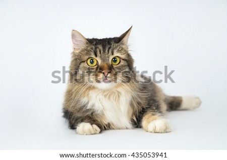 Long-haired cat lying on a white floor