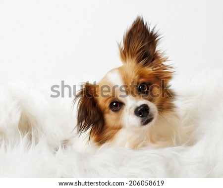 Long Haired Red Tan Papillon Chihuahua Dog Snuggled In White Fur Isolated Digitally Painted - stock photo
