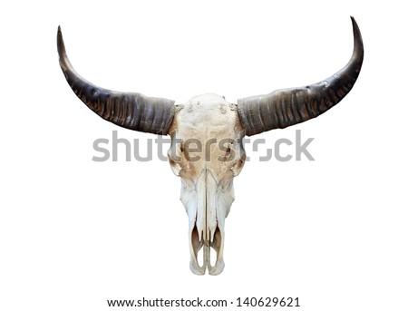 long horn buffalo skull isolated on white - stock photo