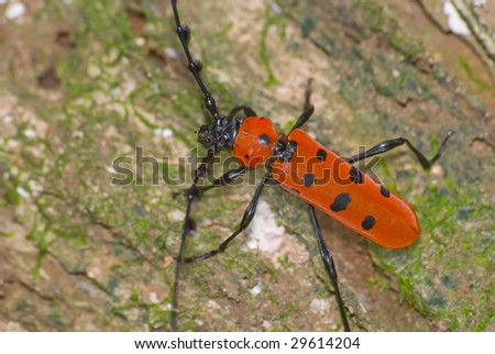 long-horned beetle - stock photo