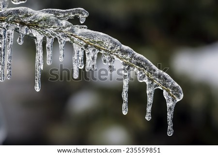 Long icicles hanging from ice covered frozen cedar tree branch in winter, closeup - stock photo