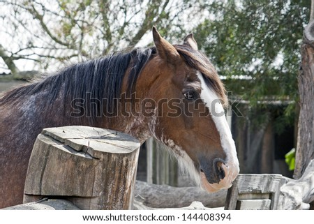 Long-maned horse in stable