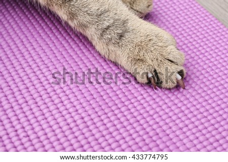 long nails of cat pull  purple  yoga mat  for web page background - stock photo
