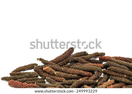 Long Pepper (Balinese pepper, Jaborandi pepper, Bengal pepper) - stock photo