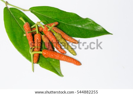 Long pepper thai spices on white background / Blurred and Select focus image, space for text