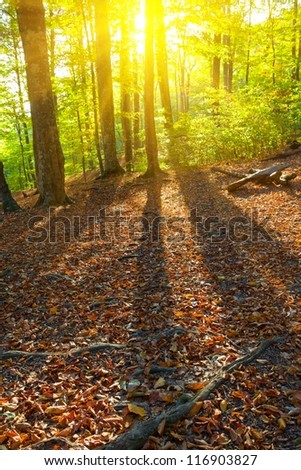 long shadows in an autumn forest