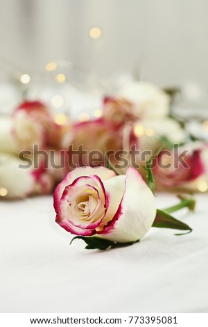 Long stem white and red roses and baby's breath with fairy light bokeh in the background. Shallow depth of field with selective flower in foreground.