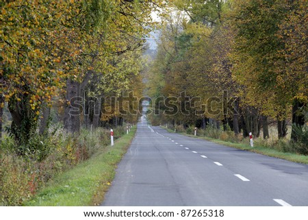 Long, straight road in autumn colors