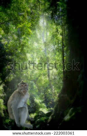 Long-tailed Macaque Monkey in the Monkey forest in Bali - stock photo