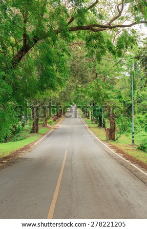 long way on the road in the forests tree - stock photo
