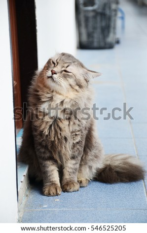 longhair cat, cat, pet, home pet