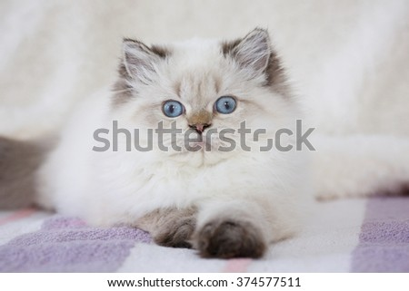 Longhair kitten lying on a soft striped rug