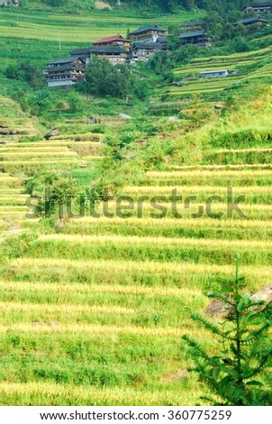 Longji rice terraces,China