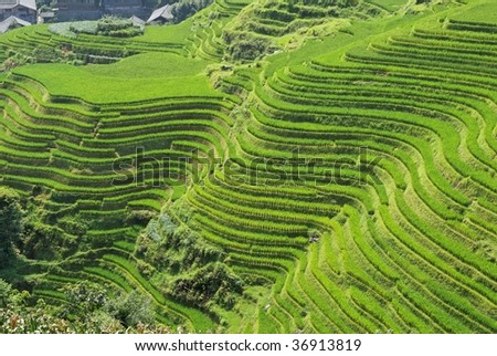 LongJi rice terraces (Guangxi province, China) in late summer. The lines around the mountain forms almost an abstract pattern - stock photo