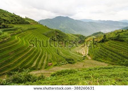 Longsheng rice terraces china - stock photo