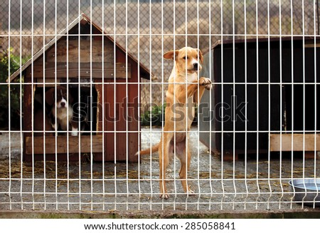 Lonly abandoned puppy leaning on a fence of a enclosure in a dog shelter. Looking sad.