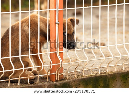 Lonly and sad abandoned puppy behind fence of a enclosure in a dog shelter. Looking scared. - stock photo