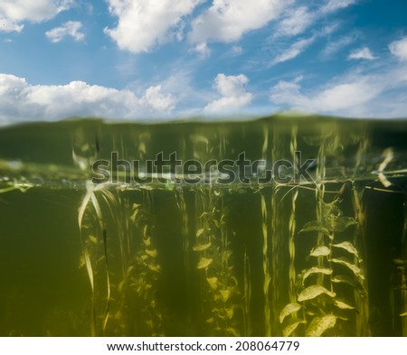 Look above the water and under the water in the Lake on a sunny summer day - stock photo