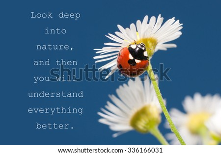 Look deep into nature, and then you will understand everything better - quote with a Ladybug on a tiny white wildflower  - stock photo