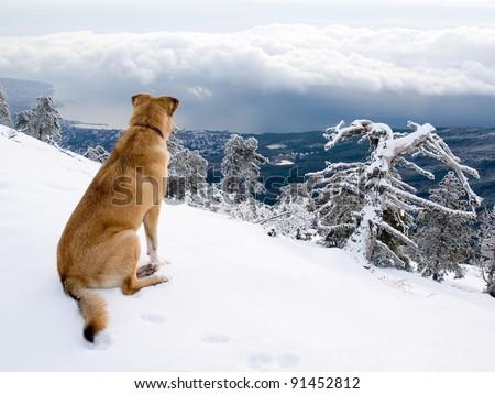 Look dog. - stock photo