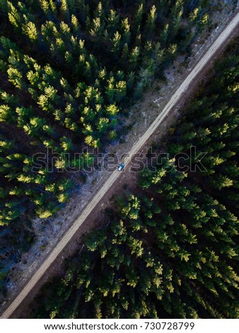 Look down view on a dense pine forest with dirt road in the middle
