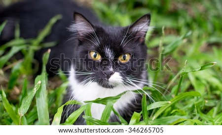Look of the cat at the green grass