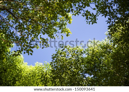 look up to the sky in the forest - stock photo