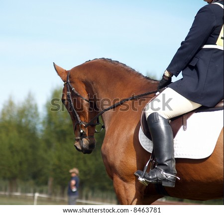 Looking along the shoulder of a dressage horse - stock photo