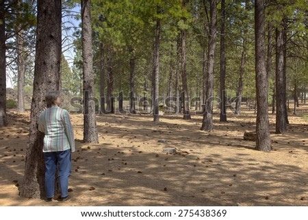 Looking at a tree forest near Lava Butte in central Oregon. - stock photo
