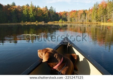 Looking at the scenic autumn beauty - stock photo