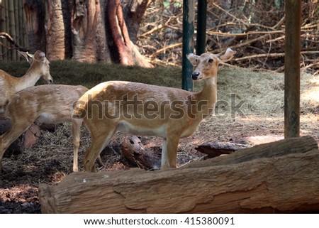 looking deer - stock photo